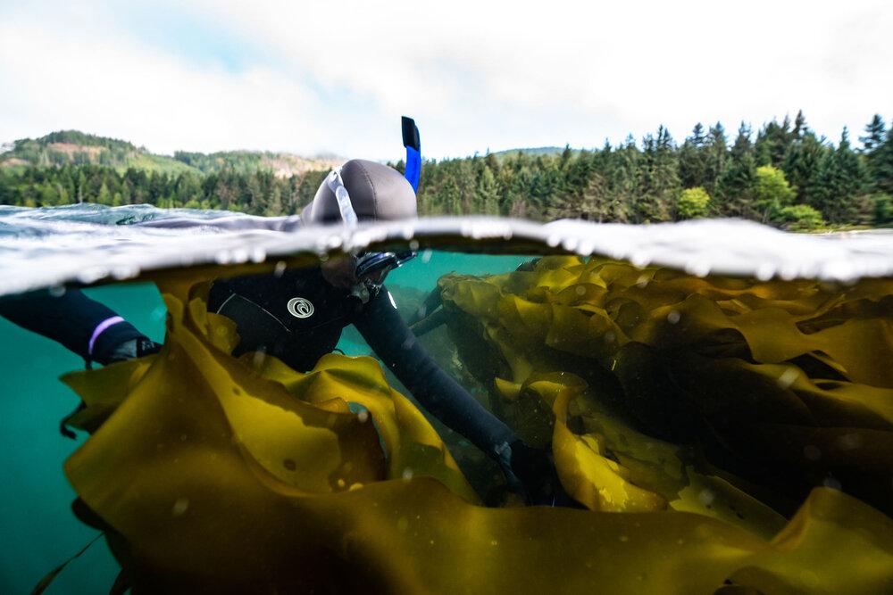 amanda swinimer seaweed photo by chris adair